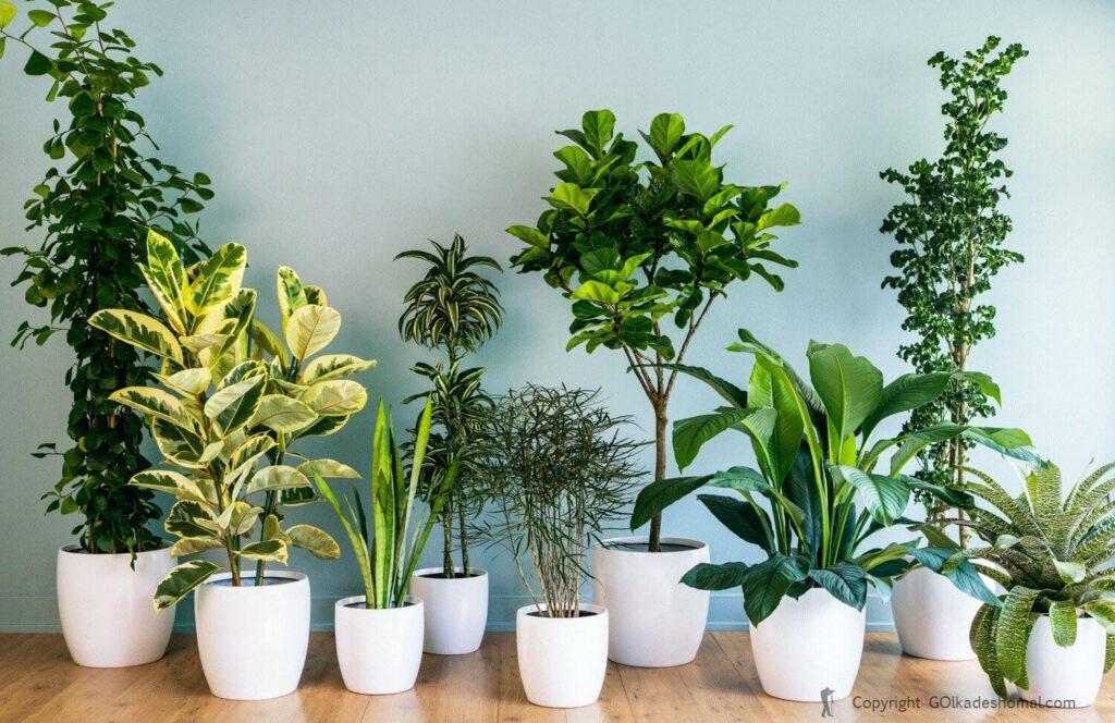 پرورش گیاهان زینتی و دارویی
